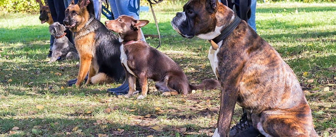Batavia Dog Training