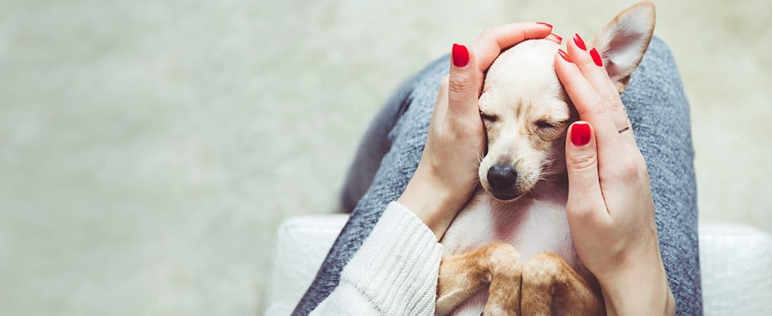 Batavia Pet Care