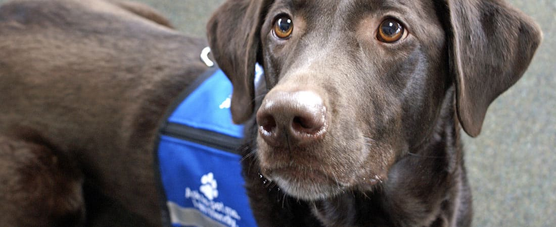 Batavia Therapy Dog Training