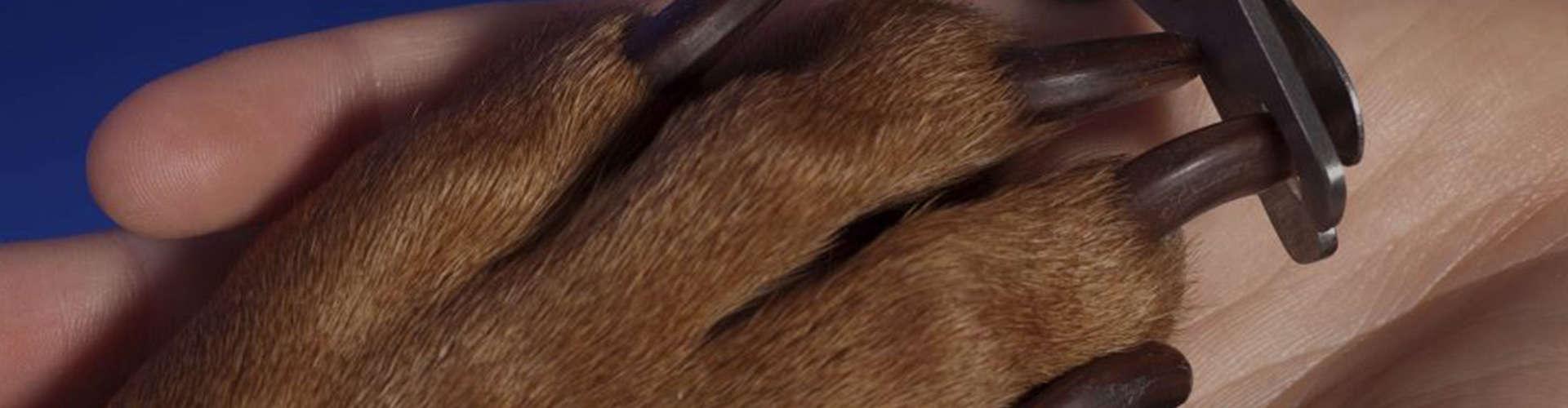 Dog Nail Trimming Batavia