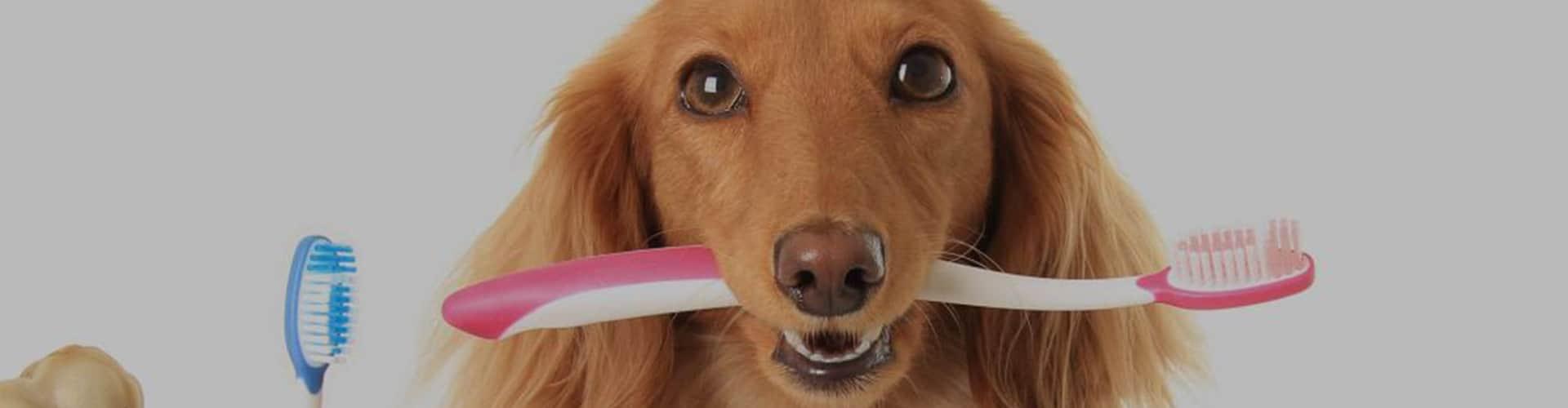 Dog Teeth Brushing Batavia