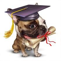 Dog Training Elgin IL