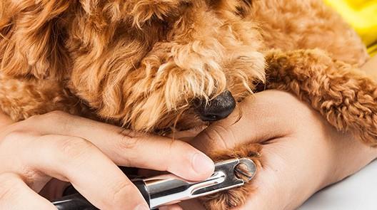 Dog nail trimming Batavia il
