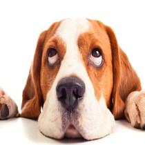 glen ellyn WoofBeach cove dog grooming